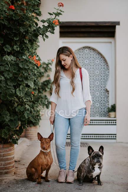 Femme moderne à la mode avec le bouledogue et le chien restant sur le trottoir de rue — Photo de stock