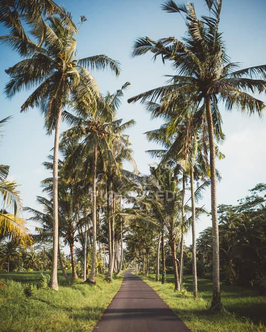 Strada in verde terreno tropicale con alte palme, Bali — Foto stock
