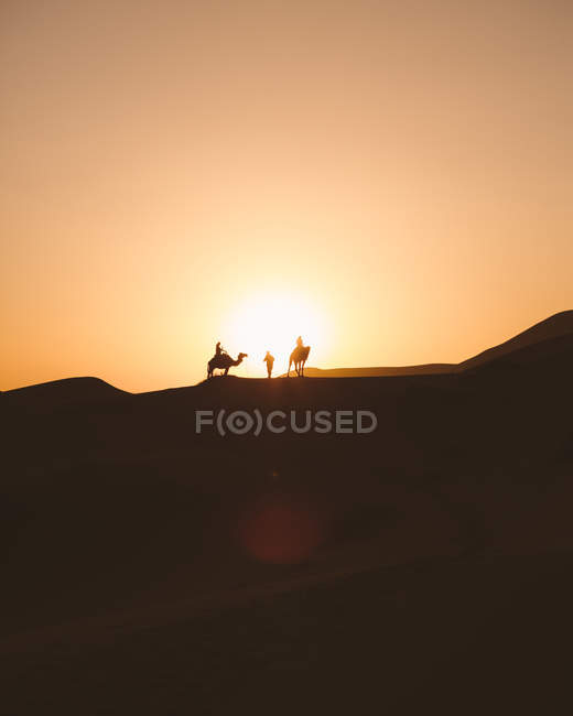 View of camels silhouettes on sand dune in desert against sunset light, Morocco — Stock Photo