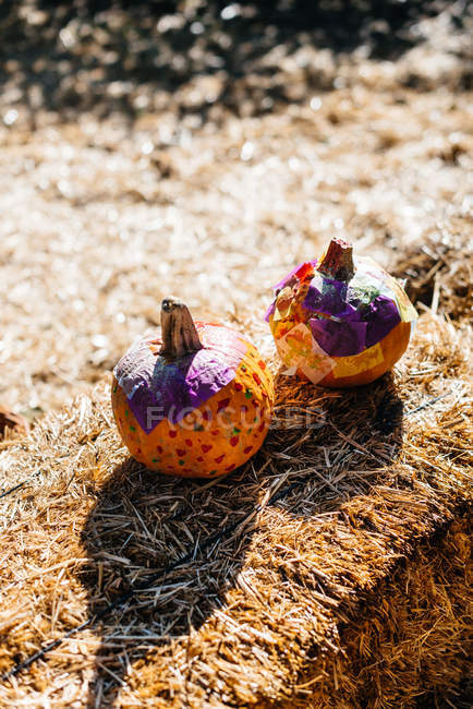 De arriba redondas pequeñas calabazas naranjas maduras colocadas en patio soleado - foto de stock