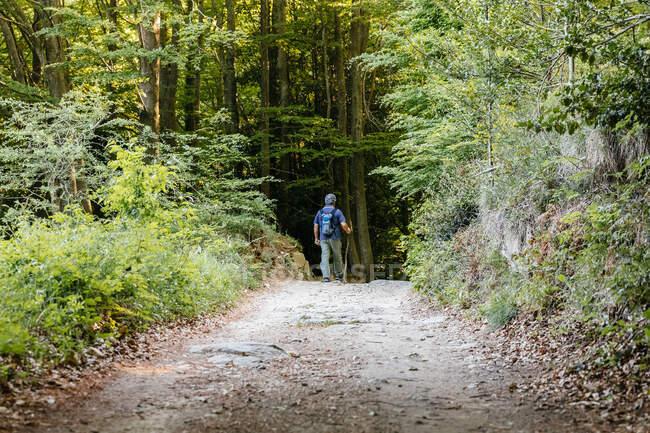 Back view of senior man doing trekking on the mountain — Stock Photo