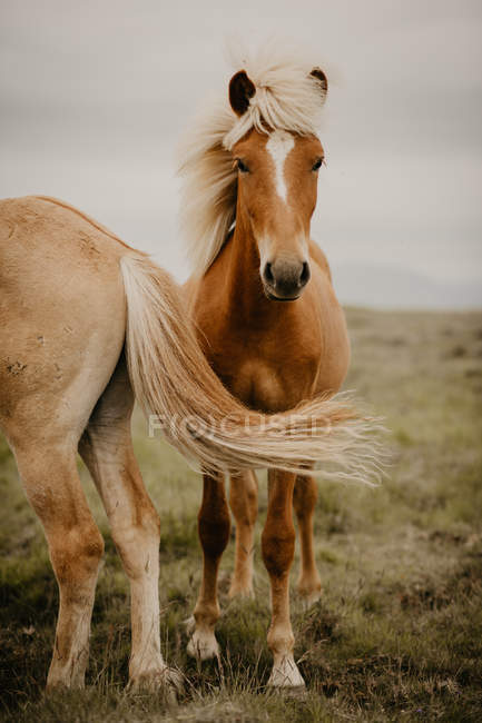 Closeup of brown horses trotting in wonderful meadow on autumn day — Stock Photo