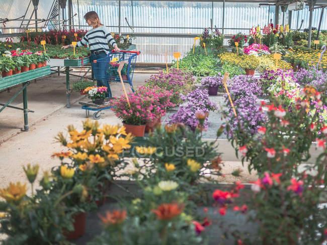 Cliente donna con carrello sul mercato dei fiori — Foto stock