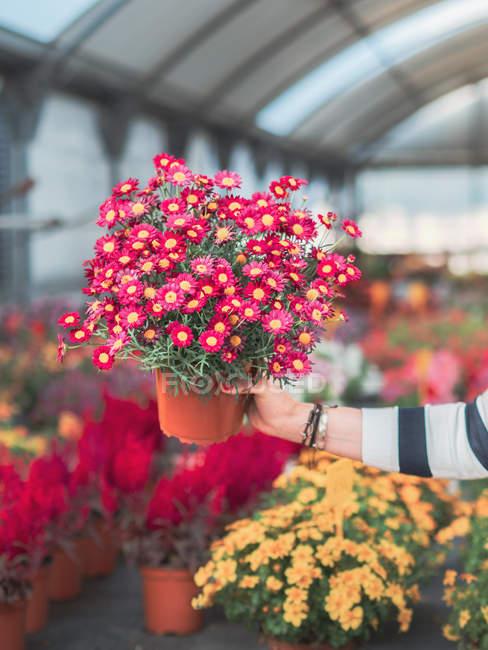 Immagine ritagliata di donna con mazzo di fiori colorati — Foto stock