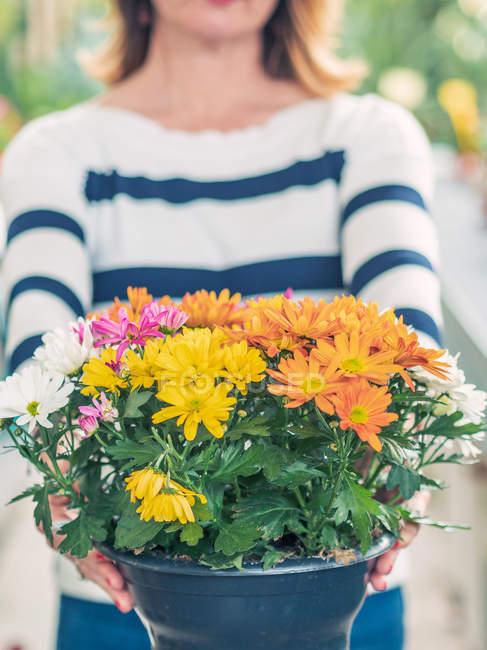 Immagine ritagliata di donna che tiene vaso da fiori con crisantemi multicolori su sfondo sfocato — Foto stock