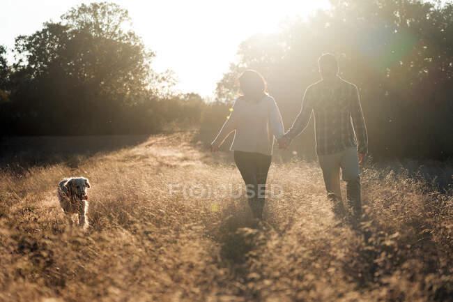 Вид на пару, держащуюся за руку и выгуливающую с собакой на золотом сельском поле с ярким закатом — стоковое фото