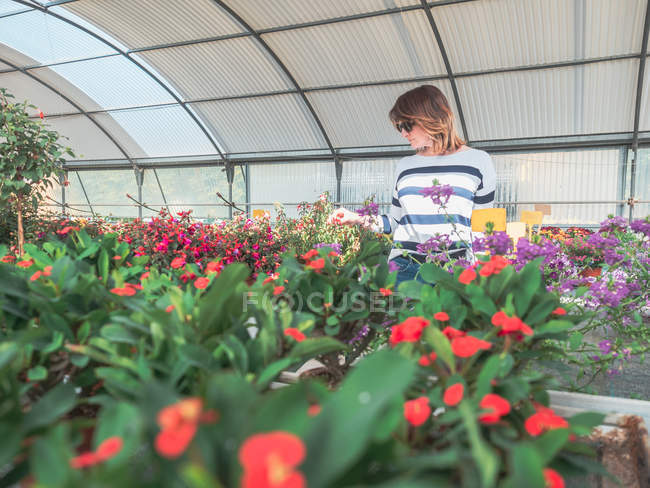 Woman studying flowers in greenhouse — Stock Photo