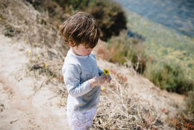 З іншого боку, милий малюк серйозно дивиться на жовту квітку в руках на сухому гірському пагорбі в сонячний день. — стокове фото