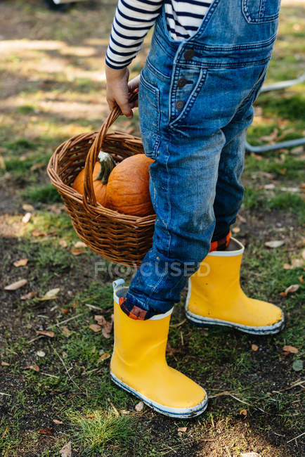 Cropped of child in denim overalls and yellow rubber boots carrying pumpkins in basket in yard — Stock Photo
