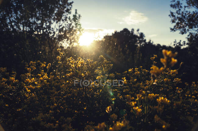 Bright sunrise through branches of trees — Stock Photo