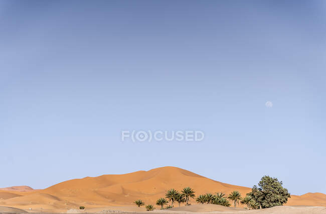 Landscape of palms and oasis in the middle of desert — Stock Photo