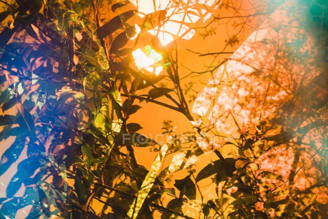 Яскравий спалах сонячного світла, що висвітлює чагарники з квітучими рослинами в саду — стокове фото