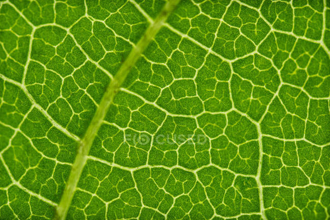 Closeup of bright juicy green leaf with yellow streaks — Photo de stock