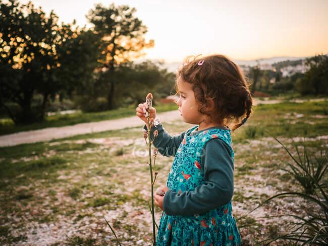 Вид сбоку восхитительной девочки, с восхищением смотрящей на цветок в парке на закате — стоковое фото