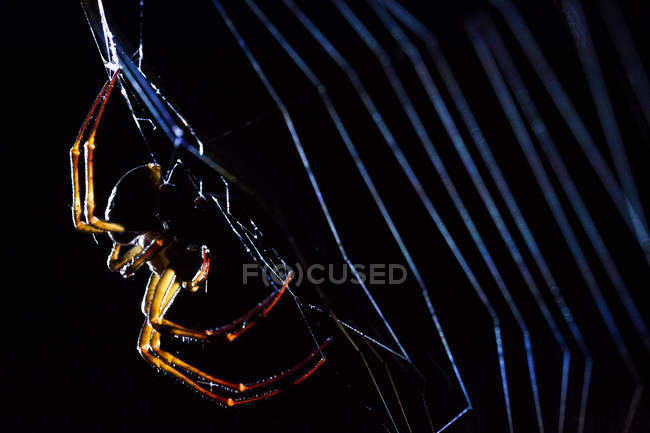 Big predatory spider weaving cobweb on black background — Stock Photo