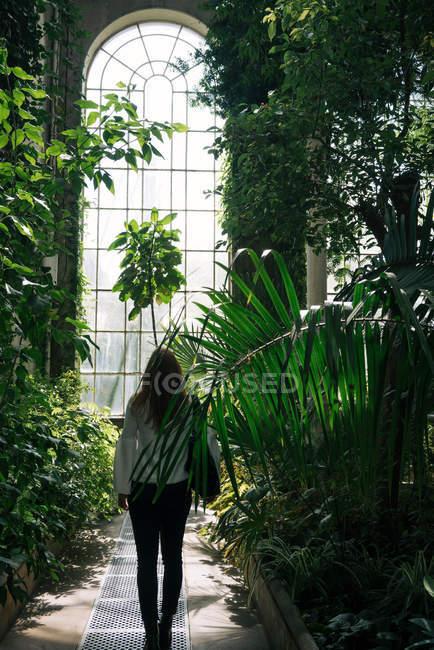 Vue arrière de la femme marchant entre les plantes vertes et les buissons à l'intérieur de l'ancienne serre avec un haut plafond et une fenêtre voûtée, Écosse — Photo de stock
