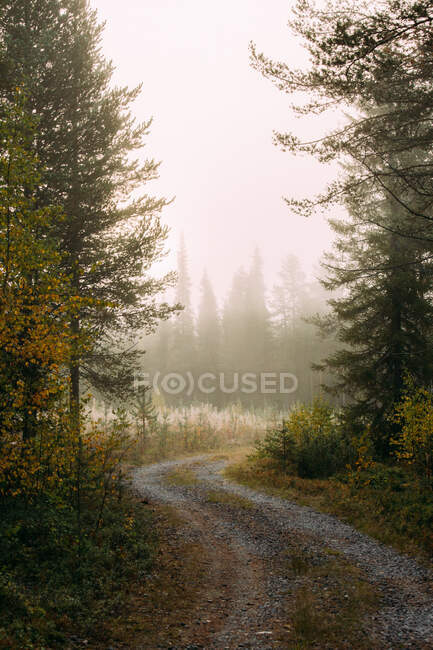 Narrow winding path going through autumn forest on misty day in Finland countryside — Stock Photo