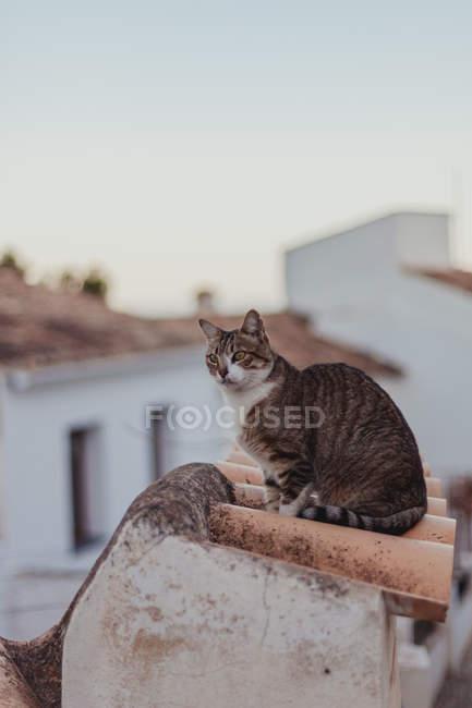 Chat assis sur une clôture en tuiles près d'un trottoir parmi des maisons sur une rue étroite — Photo de stock