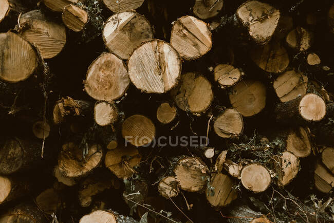 Logs of various diameters stacked lengthwise loosely for drying or processing. Cut down trees as being renewable source of fuel — Stock Photo