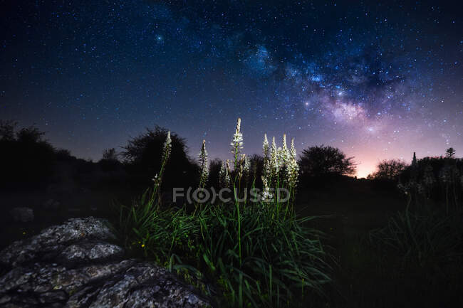 From below beautiful flowers in a beautiful dark sky with many little shines of stars — Stock Photo