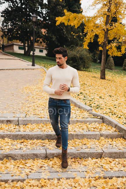 Гламурный красивый мужчина в джинсах и в белом свитере ходит по желтым осенним листьям в городе — стоковое фото