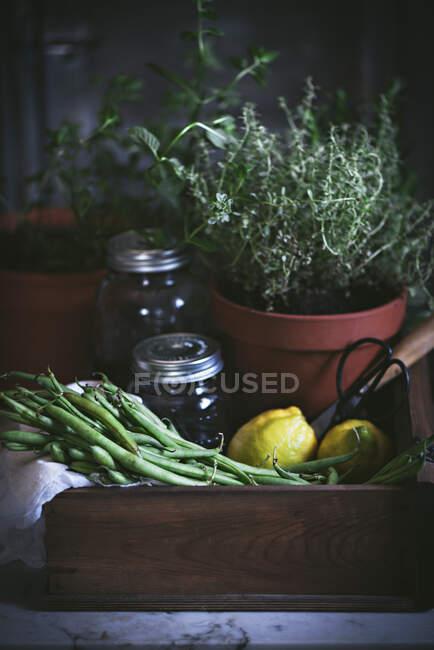 Composition de la plante en pot avec haricots verts crus et citrons avec pot en verre dans une boîte en bois — Photo de stock