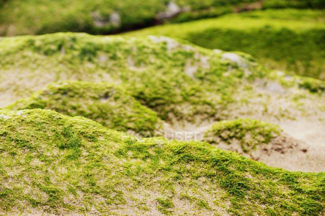 Gros plan de colline pierreuse couverte de mousse dans la nature — Photo de stock