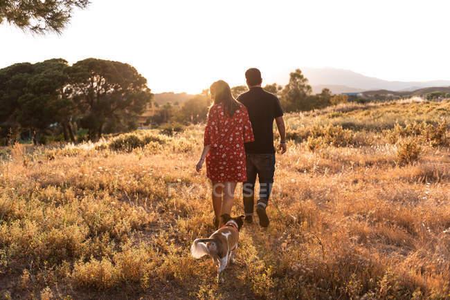 Vue arrière de couple joyeux marchant avec chien amical parmi l'herbe jaune dans le parc — Photo de stock