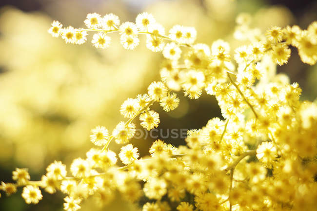 Closeup of tender golden twigs on sunny day — Stock Photo
