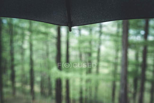 Spitze des nassen schwarzen Regenschirms auf verschwommenem Waldhintergrund an einem Sommertag — Stockfoto