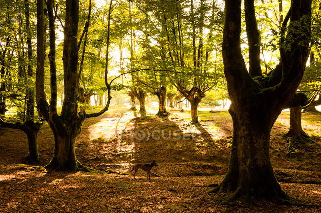 Dog standing on fairy forest — Stock Photo