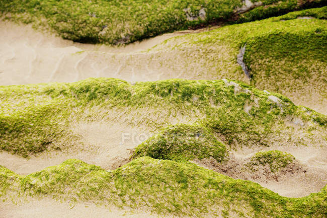 Closeup of stony hill covered with moss in nature — Stock Photo