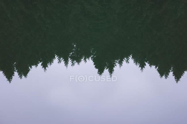 Superficie tranquila del agua de estanque con reflejo del bosque de coníferas y cielo nublado en el campo. - foto de stock