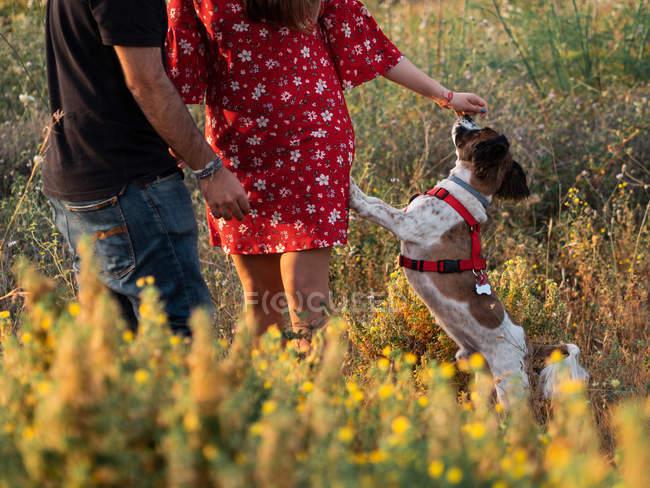 Casal irreconhecível com pequeno cão amigável entre grama amarela no parque — Fotografia de Stock