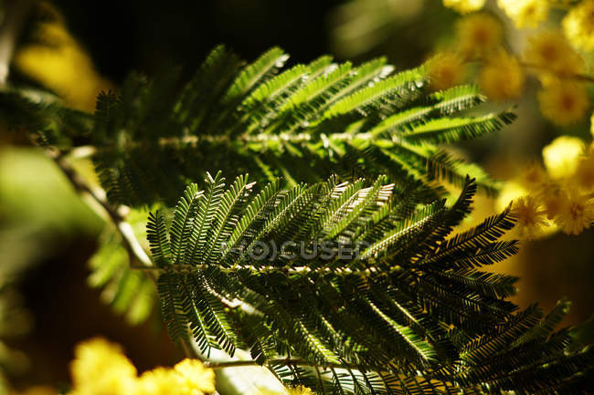 Green spruce plant growing in park — Stock Photo