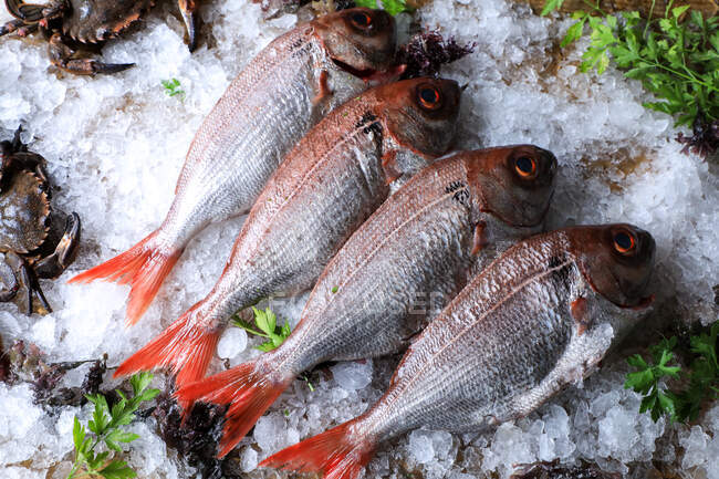 Big fish with red tail on ice cubes — Stock Photo