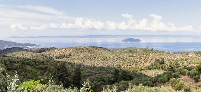 Picturesque view of hilly green coast with transparent turquoise calm water in bright sunlight, Halkidiki, Greece — Stockfoto