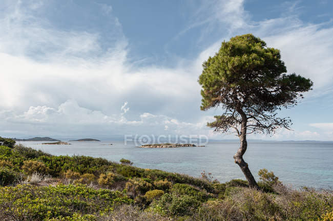 Scenic view of hilly coast and green tree against calm sea and breathtaking sky in bright day, Halkidiki, Greece — стокове фото
