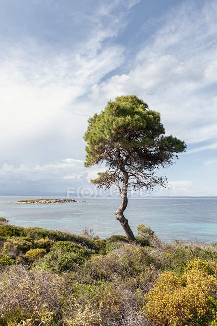 Scenic view of hilly coast and green tree against calm sea and breathtaking sky in bright day, Halkidiki, Greece — Stock Photo
