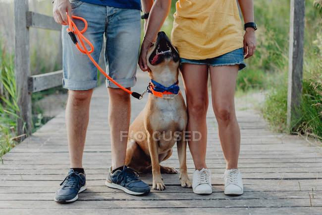 Счастливая пара играет с собакой в сельской местности, низкая секция — стоковое фото