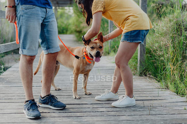 Casal feliz brincando com o cão no campo — Fotografia de Stock