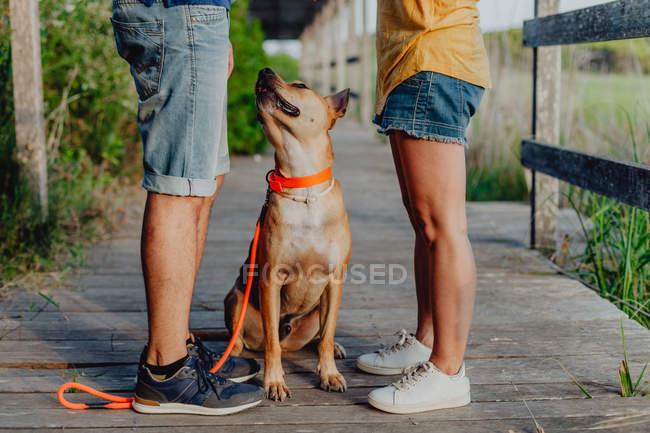 Couple heureux relaxant avec chien à la campagne, section basse — Photo de stock