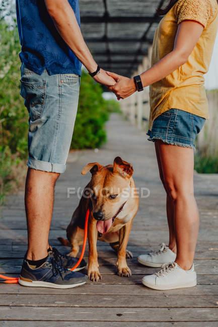 Вид на случайную пару, держащуюся за руки рядом с игривой коричневой собакой на поводке на деревянной террасе — стоковое фото
