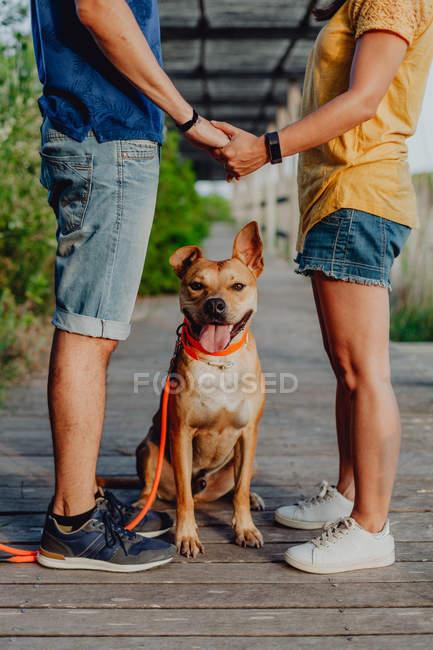 Ausgeschnittene Ansicht eines lässigen Paares, das sich an der Leine neben einem verspielten braunen Hund an der Holzterrasse hält — Stockfoto