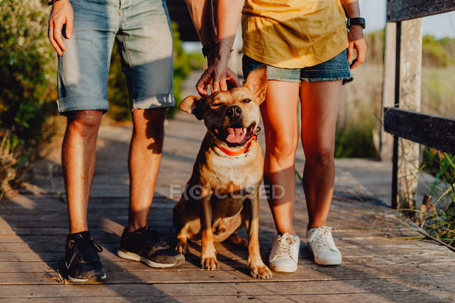Cropped view of affectionate man and woman standing beside relaxing playful brown dog at wooden terrace — Stock Photo