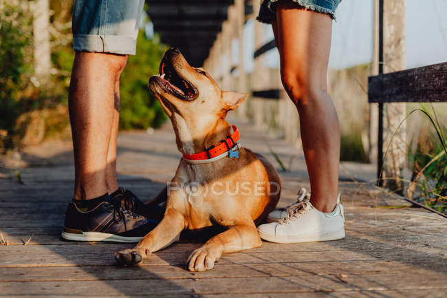 Loving couple standing with dog at countryside, low section — Stock Photo