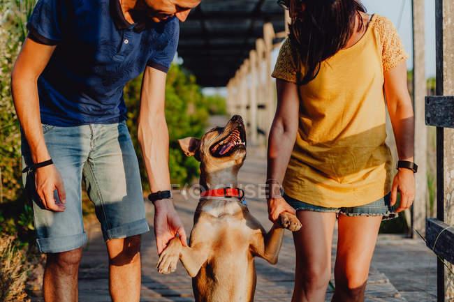 Uomo e donna casual che tengono sulle zampe giocoso cane marrone mentre camminano lungo una terrazza in legno nella campagna rurale — Foto stock
