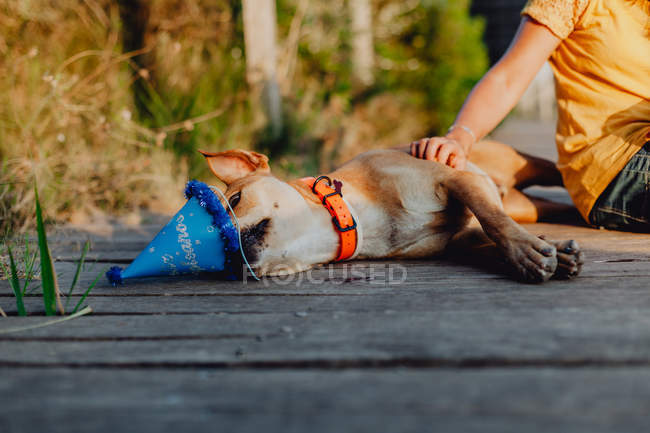 Hand of woman touching brown dog sniffing party hat — Stock Photo