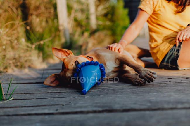 Mano de mujer tocando perro marrón olfateando sombrero de fiesta - foto de stock
