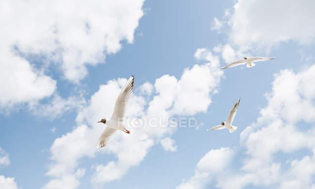 Чайки летять проти голубого неба. — стокове фото